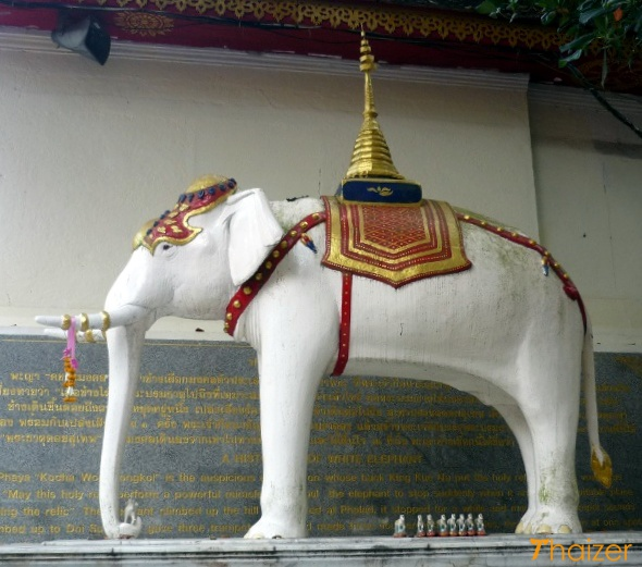 The legend of the white elephant of Doi Suthep