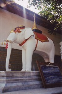 Thailand white elephant