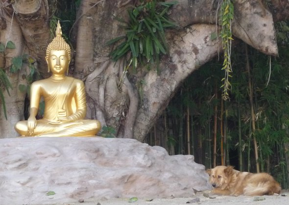 Buddha and resting dog at temple in Thailand