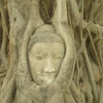 stone Buddha head in tree roots, Wat Mahathat, Ayutthaya