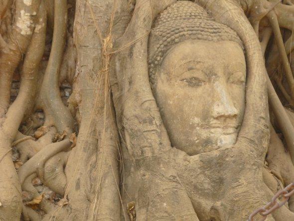 stone Buddha head in tree roots, Wat Mahathat, Ayutthaya