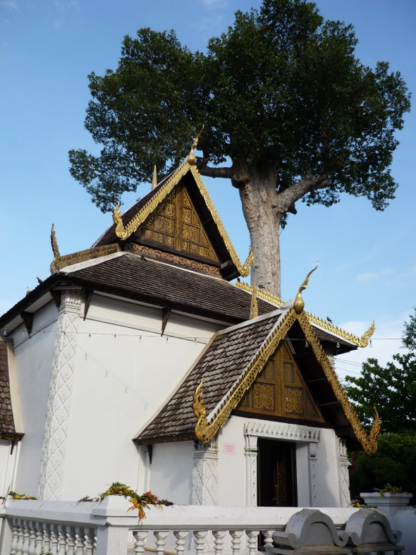 The building and tree which protect the Chiang Mai city pillar (Inthakin) at Wat Chedi Luang