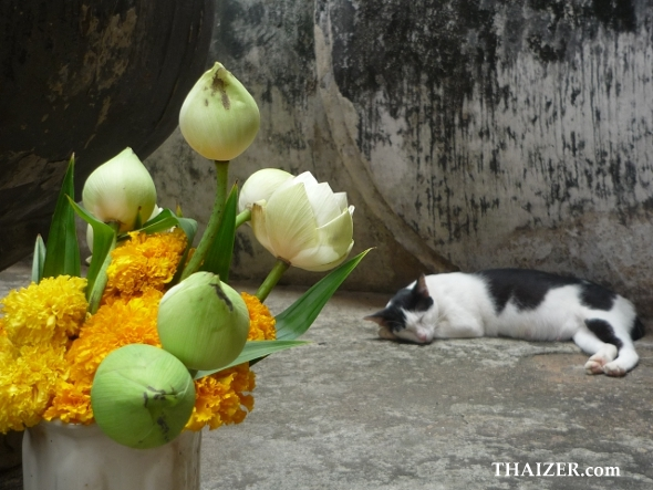 sleeping cat at Wat Si Chum in Sukhothai