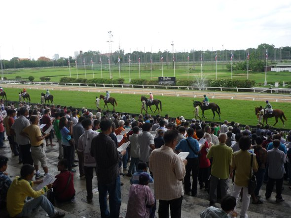 horses parade along the home-straight before start of the race
