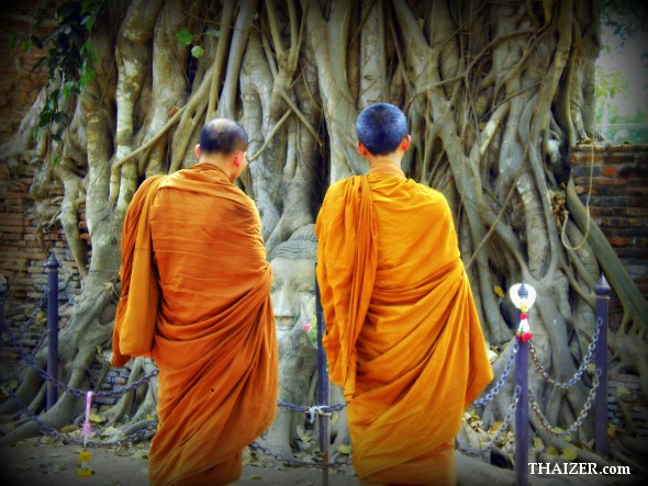 Two Thai monks survey the Buddha head in tree roots at  Wat Mahathat, Ayutthaya