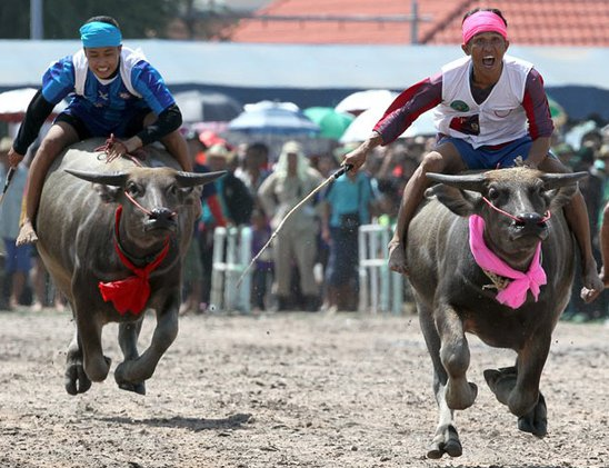 Buffalo Racing in Chonburi