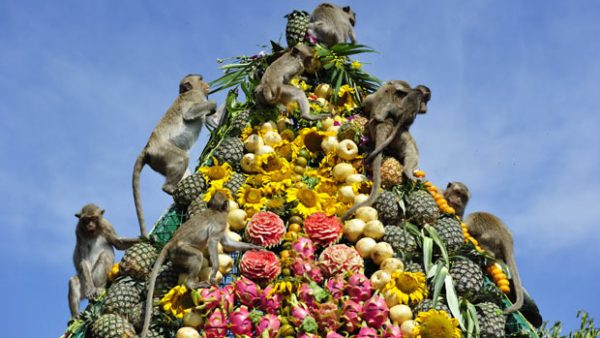 Lopburi Monkey Banquet and Festival