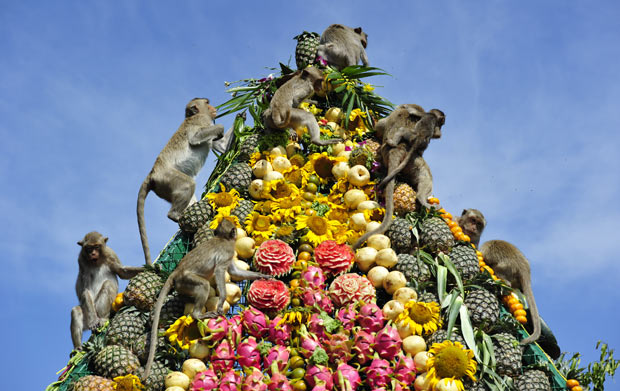 Lopburi Monkey Banquet and Festival