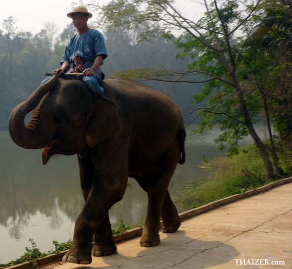 Mahout and elephant at Thai Elephant Conservation Centre in Thailand