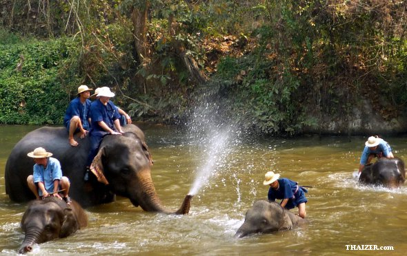 ThaiElephantConservationCentre3