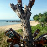 beer bottle tree at Klong Nin Beach, Ko Lanta