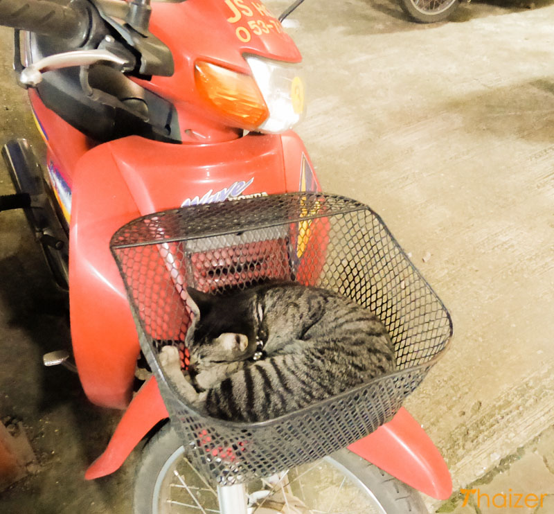 Kitten sleeping in motorcycle basket in Chiang Rai