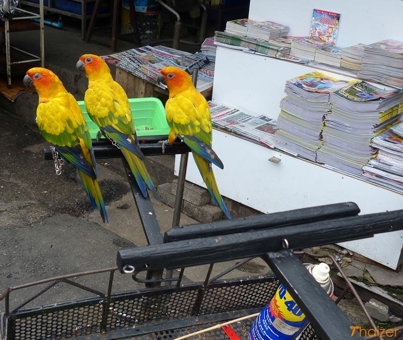 three birds hitch a lift on a motorbike