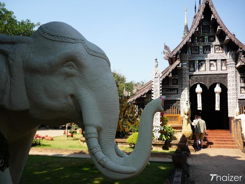 elephant at a temple in Thailand