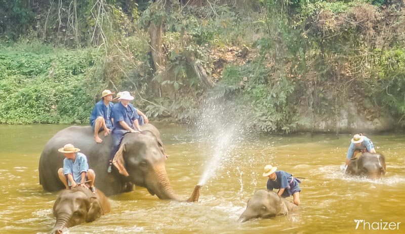 thai_elephants_lampang