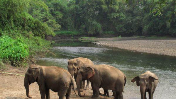 Elephant's World, Kanchanaburi
