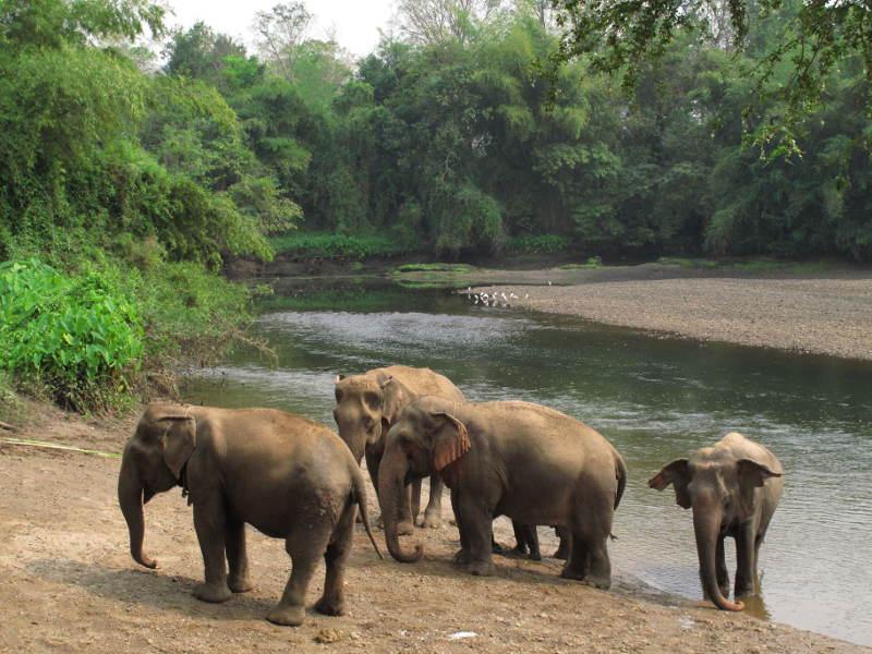 Elephants World Sanctuary, Kanchanaburi