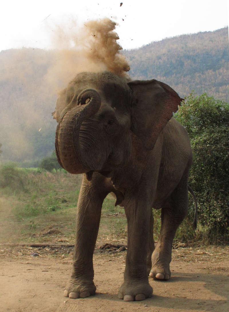Elephant's World sanctuary, Thailand