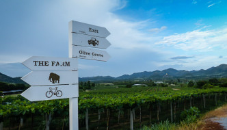 Hua Hin Hills Vineyard (Monsoon Valley)