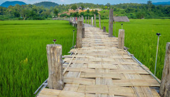 The Bamboo Bridge of Faith Across the Rice Fields of Mae Hong Son