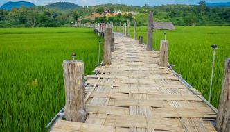 The Bamboo Bridge of Faith Across the Rice Fields of Mae Hong Son