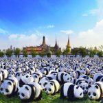 Bangkok Prepares for 1,600 Pandas World Tour
