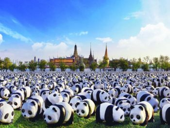 artist's impreesion of pandas at Sanam Luang, Bangkok