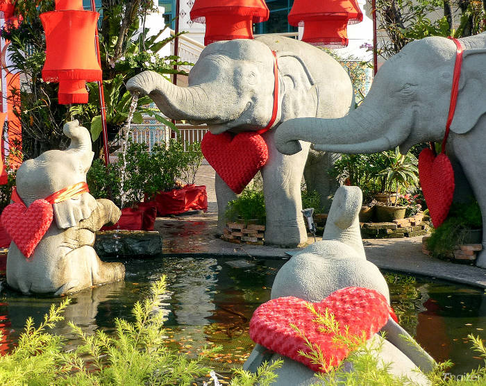 Valentine's Day elephants in Chiang Mai, Thailand