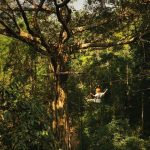 Review: Flight of the Gibbon, Chiang Mai