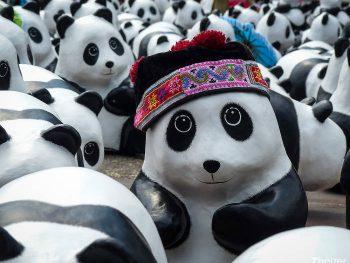 1600 pandas world tour in Thailand