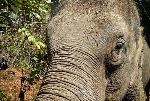 Tong Bai Elephant Foundation