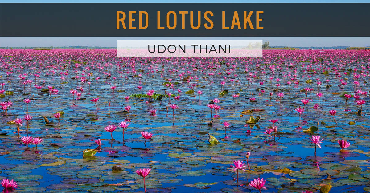 Red Lotus Lake, Udon Thani